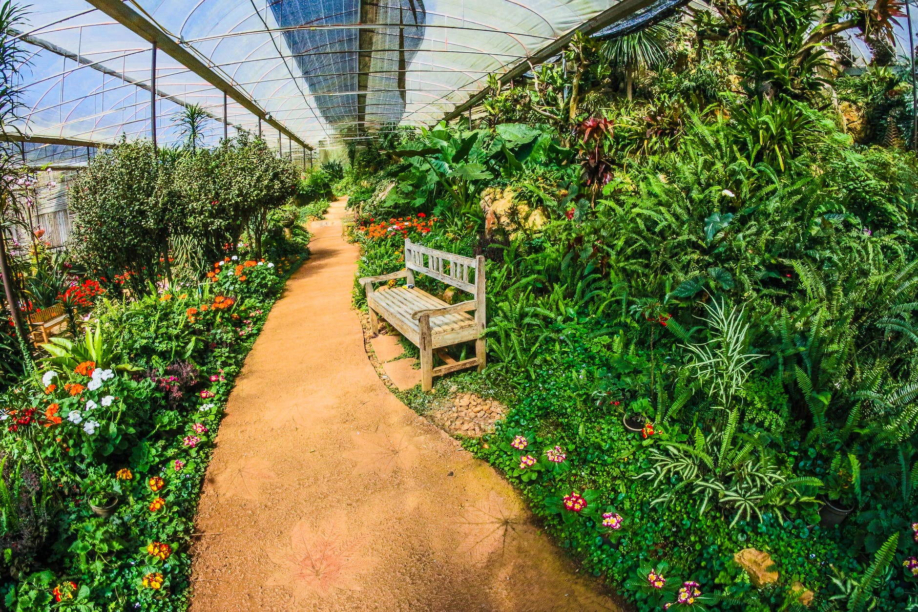 Indoor Gardening Vs. Outdoor Gardening – Which One You Should Prefer