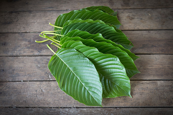 Kratom Effects Substitute Opiates